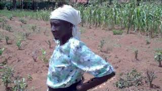 Kenyan Tea Farmer (74 years old)