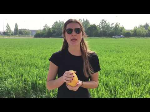 Crema Budwig con Bacche e Granola, Passion Fruit e Kiwi from YouTube · Duration:  1 minutes 16 seconds