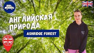 ПРИРОДА АНГЛИИ: ПРОГУЛКА ПО ЛЕСАМ И ПОЛЯМ | ASHRIDGE FOREST