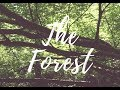 The Forest - Nikon D3300 Video Test