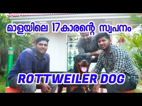Rottweiler enna pavam nayayumayi Praveen mala 😜(Dog business) [ECO OWN MEDIA] Malayalam 2018