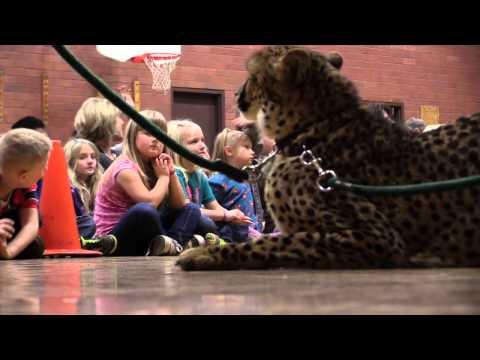 Cheetahs at Bohemia Elementary School