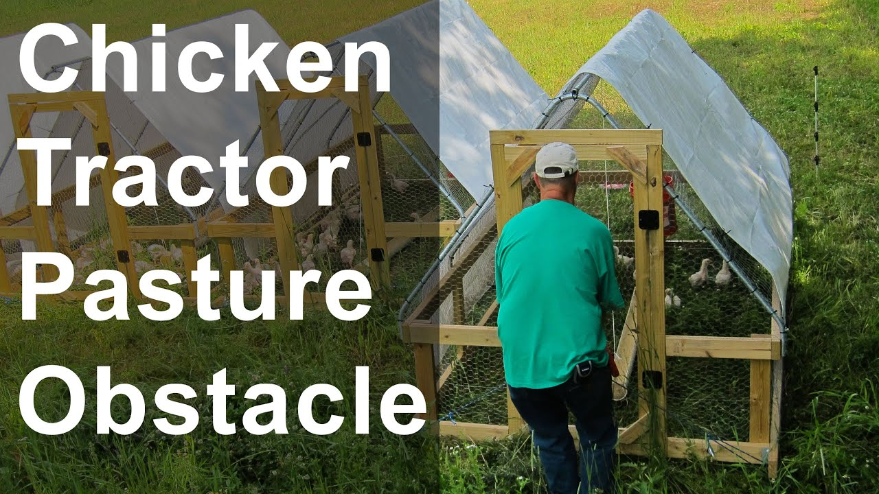 Chicken Tractor Pasture Obstacles