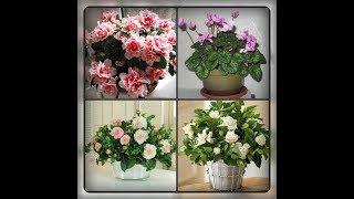 Особенные цветы на вашем подоконнике!