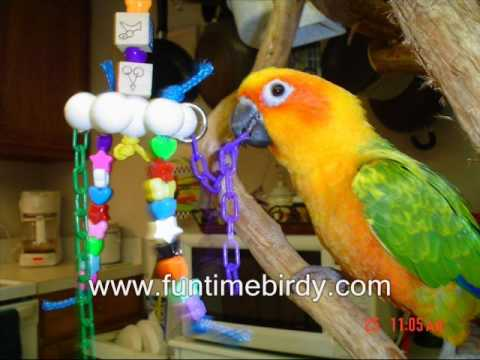 FunTime Birdy Parrot Playgyms and Bird Toys