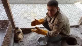 Сурок (байбак) новые члены нашей зоосемьи)Смешные и забавные толстуны)Подписывайтесь на влог сурков)