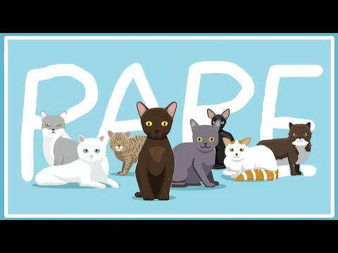 Top 10 Rarest Cat Breeds