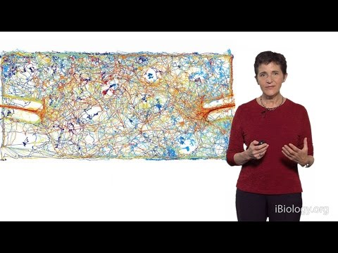 Deborah Gordon (Stanford) 2: The Evolution of Collective Behavior