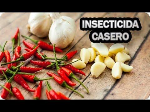 Combate Tus Plagas Con Este Insecticida Casero APICHI Mosca Blanca Araña Roja Pulgón Orugas