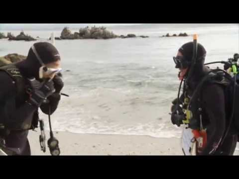 Careers in Diving - Interview with Diving Safety Officer, Diana Steller, Ph.D.