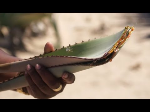Traditional Medicine I Fading Knowledge of Healing Powers of Herbs - Namibia