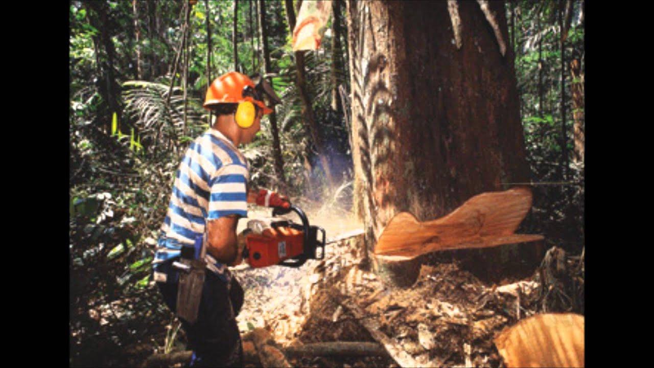 Reportaje de la tala inmoderada de rboles youtube for Como talar un arbol