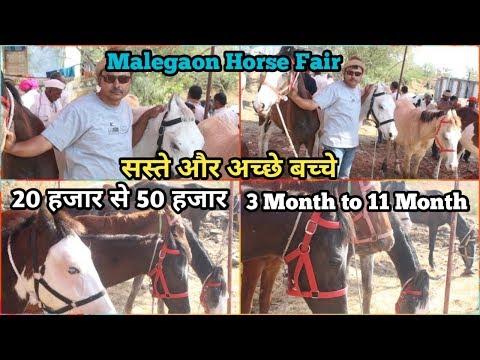 Malegaon horse fair 2019- मालेगांव में आये सस्ते और अच्छे बच्चे