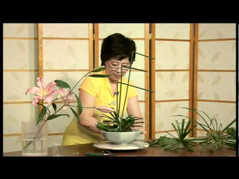Cam Hoa - Nguyen Cau