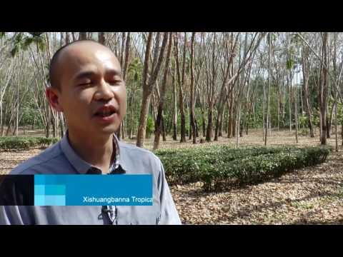 Safeguarding Yunnan