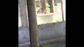 Я снимаю как кот ловит голубей