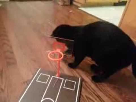 Cat Playing Mini Basketball - Attempting Dunking and Chasing the Ball