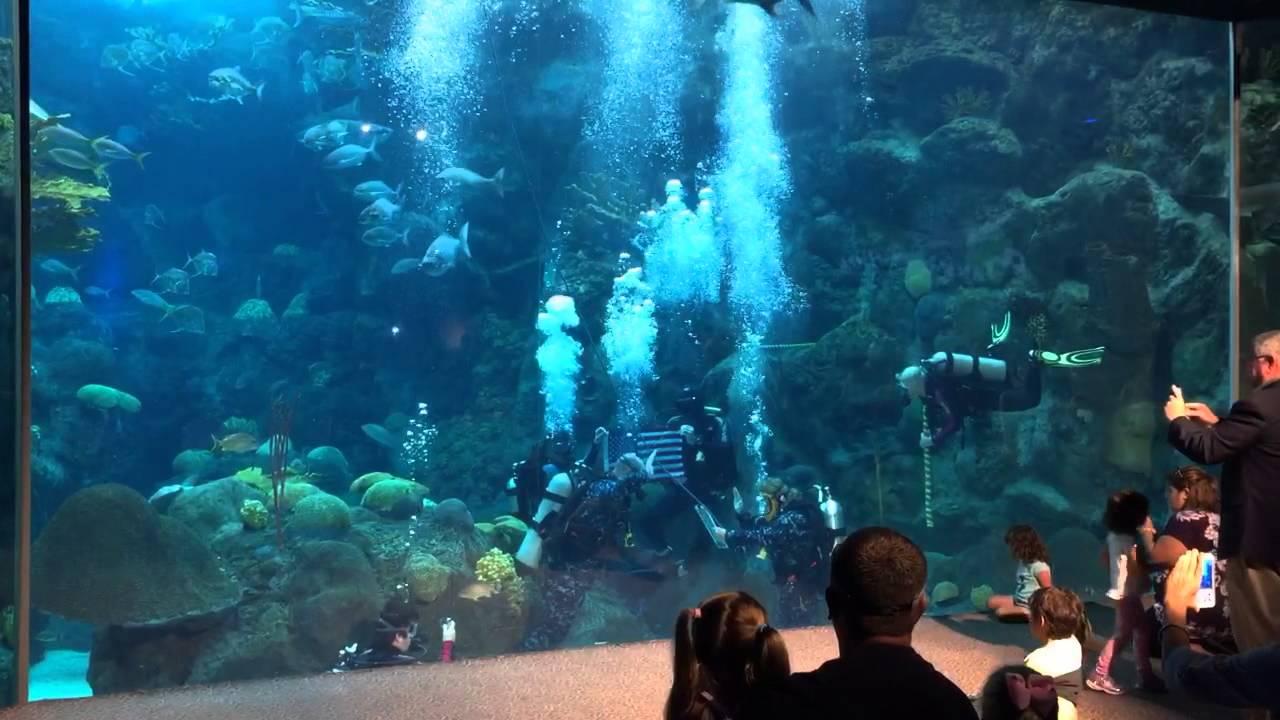 Petty Officer Adams Reenslists Underwater in the Aquarium ...