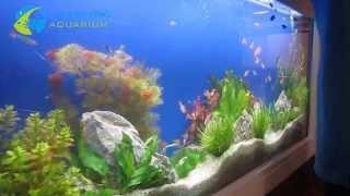 Làm hồ cá treo tường, bể thủy sinh treo tường đẹp giá cạnh tranh