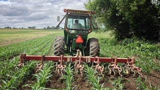 Cultivating - Farming the old fashioned way