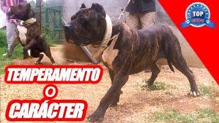 PRESA CANARIO O DOGO CANARIO