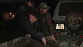 akcja ratowania niedźwiedzia