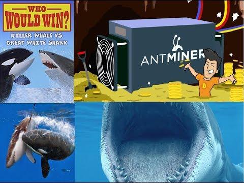 LIVE SHARKS vs WHALES? COMO COMPRAR ASICS Ant Miners?Como Pesquisar?Como avaliar?Vale a pena?