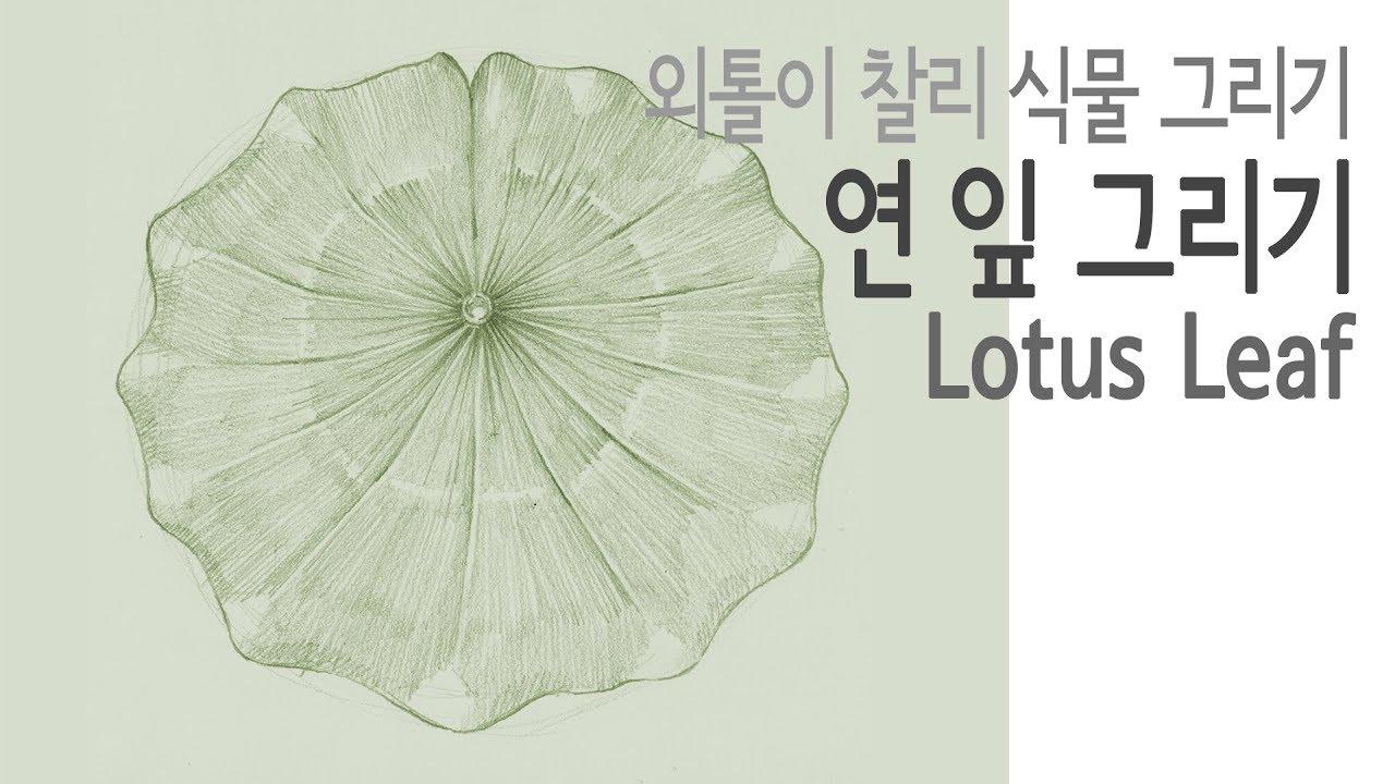 Plant Drawing Pencil Leaf 04 Lotus Leaf Youtube