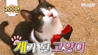 개냥이를 넘어 개가 된 고양이 / 개밥 먹고 도그 어질리티까지 | SBS 동물농장x애니멀봐
