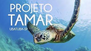 Fomos Ao Projeto Tamar | Ubatuba-sp | Olha No Que Deu...