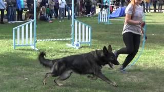 Аджилити - спорт с собакой/Dog Agility/областная выставка собак/Сумы-осень 2015