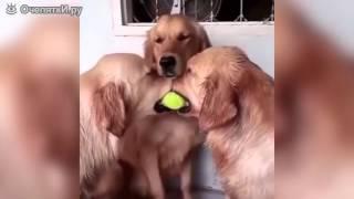 Просто смотрим и получаем куча смеху