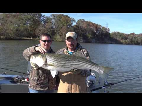 Nashville Fishing Charter's Cumberland River Trophy Fishing