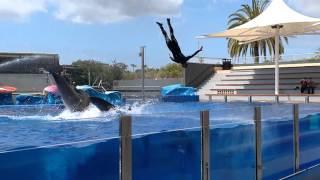 Delfinshow Marineland Mallorca 2016