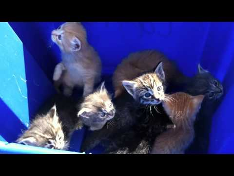 8 kittens in a box!!