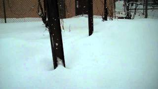 Home Farming in Pawtucket Rhode Island-Farm area covered by snow 2-1-11.mp4