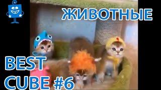 Весёлый CUBE/06 КУБ Приколы. Coub БЕЗ МАТА / Животные
