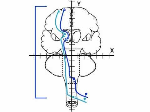 NeuroLogic Exam Videos : Sensory Exam