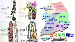 꽃배달 최고다플라워 화환 축하 근조 개업 이전 화분 동…