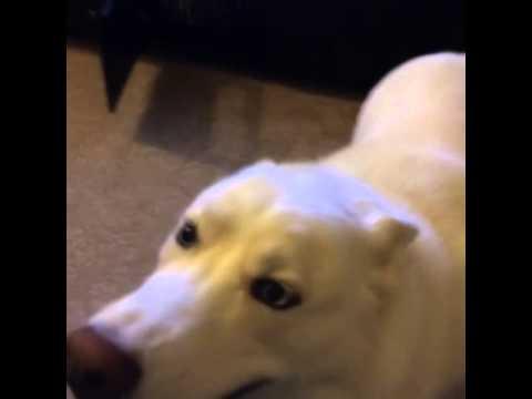 Vine – Happy Dog for NHL GameCenter