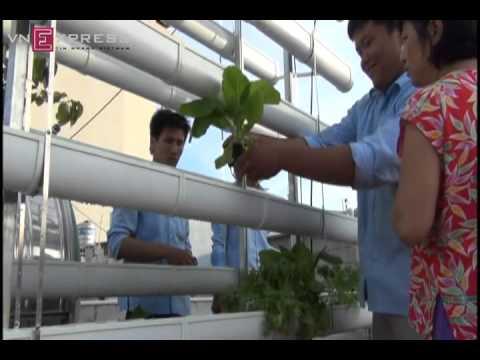 Trồng rau tại nhà không cần đất
