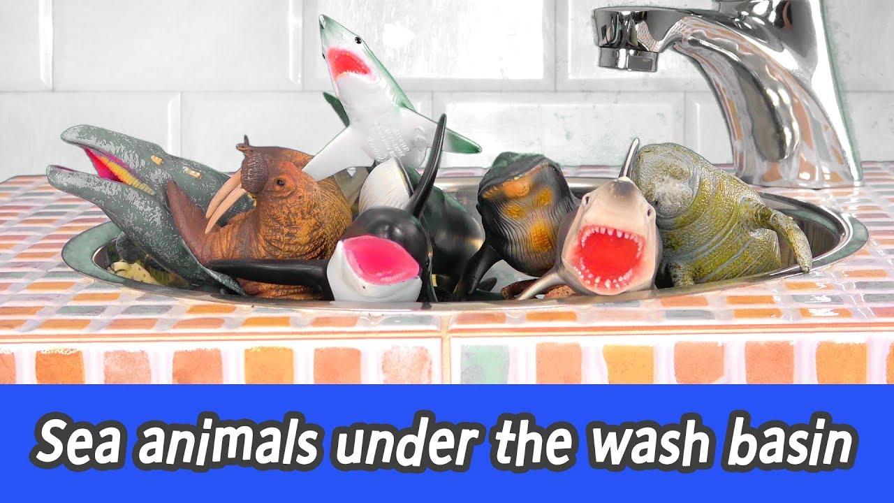 Download [EN] Sea animals under the wash basin! sea animal names for children, collecta figuresㅣCoCosToy