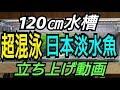 【120㎝水槽 】#1 超混泳日本淡水魚水槽立ち上げ! の動画、YouTube動画。