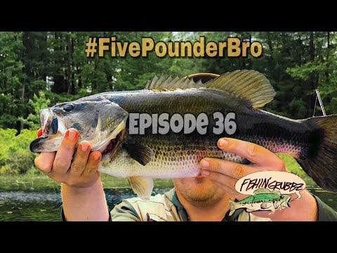 Five Pound New Hampshire Bass/First Creature Bait Bass/a Bunch of Pigs/18lb 12oz Bag