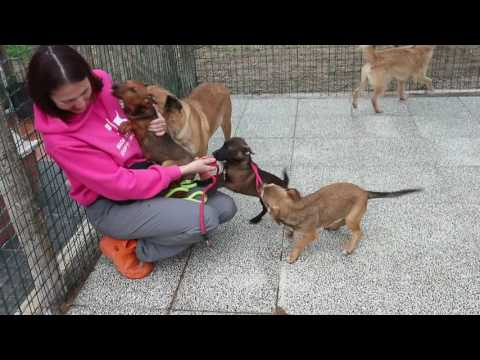 Puppies videos 2