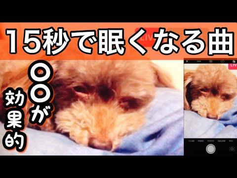 音楽 寝る 犬 が