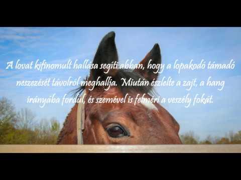 ismerkedés lovasok)