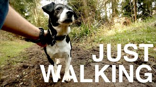 4K Shearwater Forest | Walking The Dog Through the British Countryside