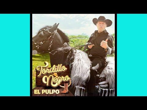 Tordillo Negro - Mi Estrella Perdida / Mi Dulce Mabel / Beatriz / Es Demasiado Tarde (Audio)