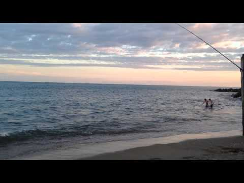 IOW fish on Ventnor beach Aug